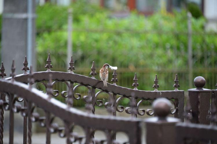 Close-up of bird on metal railing