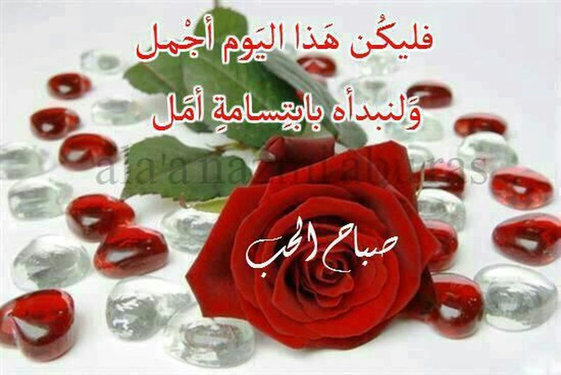 صباح الخير صباح الخير صباح الحب Good_morning Good Morning!