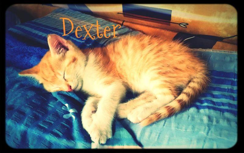 Kitten Kitty Cat Babycat New Family Member <3