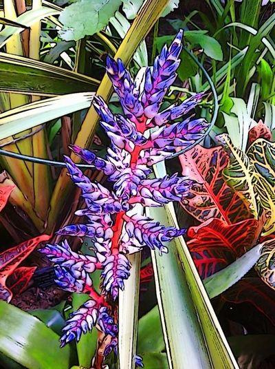 Winter Garden, Sheffield Tropical EyeEm Best Edits Nature
