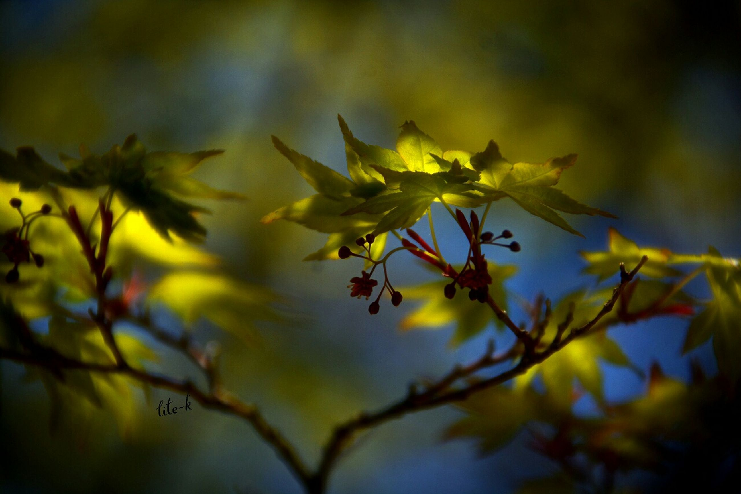 growth, focus on foreground, yellow, branch, nature, close-up, tree, beauty in nature, flower, leaf, selective focus, low angle view, freshness, twig, outdoors, fragility, season, plant, day, no people