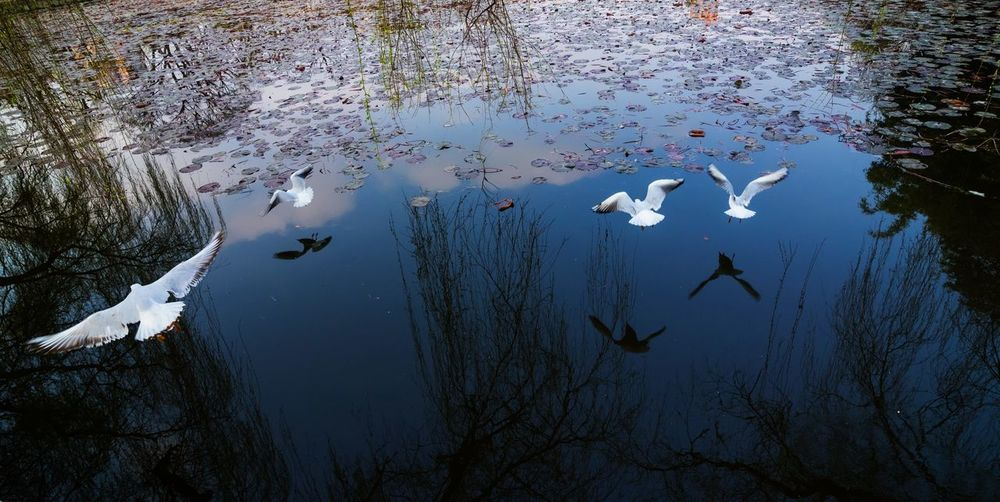 seagull flying over lake Reflection Tree Animal Animal Themes Animal Wildlife Animals In The Wild Bird Day Lake Nature No People Park Reflection Seagull Swimming Vertebrate Water