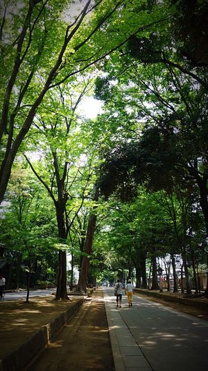 Road On The Road Japan Saitama 氷川神社 Cyclingphoto Enjoy Cycling Cycling Around Summer Cycling