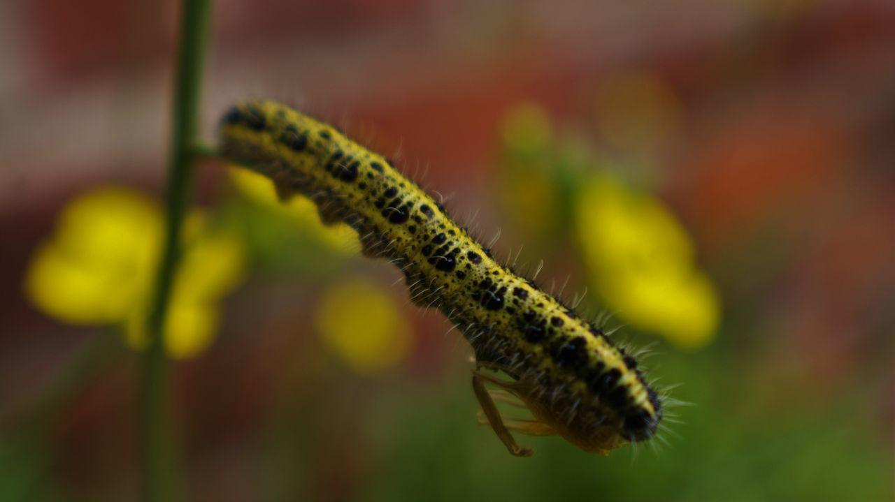 Close-Up Of Caterpillar On Stem