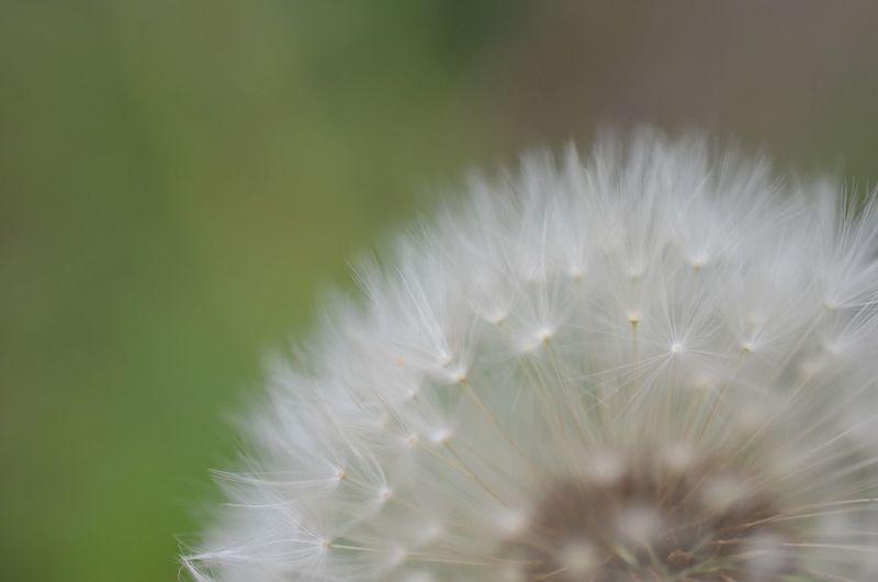 Nature Flowers 花 Macro