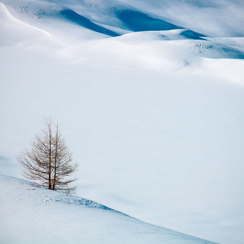 Alps France Winter Wintertime Beauty In Nature Cold Temperature Day Environment Field Frozen Land Landscape Mountains Nature No People Non-urban Scene Outdoors Plant Scenics - Nature Snow Snowcapped Mountain Tranquil Scene Tranquility Tree White Color Winter Winter Holidays