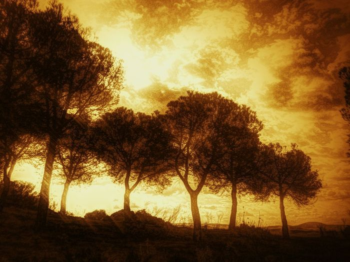 Bobastro trees. Robin Fifield - Flora Treescollection Trees And Sky Sunset_collection Light And Shadow Deep Filtered Image Deep Filtering Creative Apps Andalucía Nature Andalucia Spain Bobastro 43 Golden Moments Fine Art Photography Andalucia Rural Awehaven's Andalucia