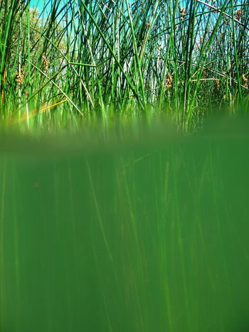 Beauty In Nature Forest Growth Lake Lakeshore Mystery Nature No People Plant Plant Pond Reed Reflection Relaxing Moments Rippled Scenics Selective Focus Splitpic  Tranquil Scene Tranquility Tropical Climate Water Waterfront Wet