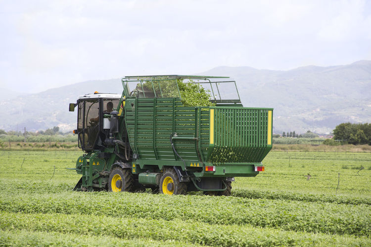 Agriculture Basil Basilico Farming Farming Vehicles Field Food Green Color Harvest Harvesting Industry Italian Land Vehicle Landscape Machinery Nature Outdoors Pesto Sauce Transportation