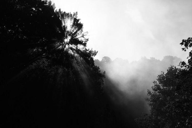 Austria Bad Gleichenberg Beauty In Nature Blackandwhite Fog M_lannoo Monochrome Nature Outdoors Tree