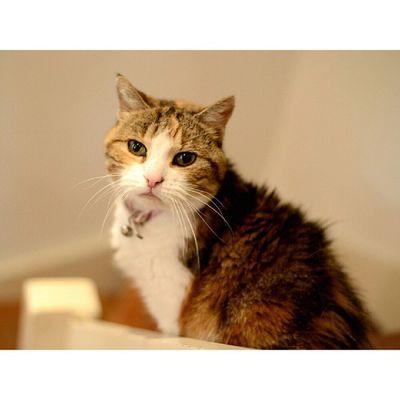 Chat Chats Cat Cats animaux animal nikon nikond800 d800 2870 asf nikon2870