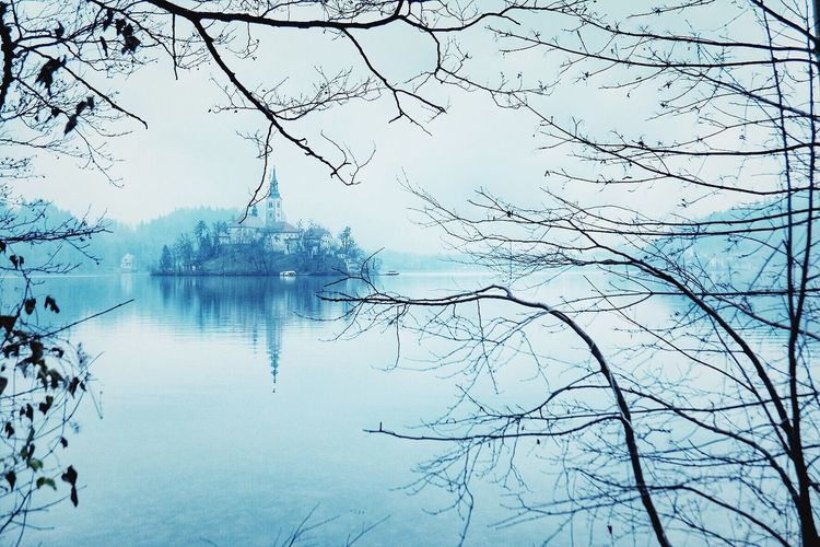 Tree Nature Reflection Beauty In Nature Sky Tranquility Branch No People Tranquil Scene Water Lake Scenics Bare Tree Outdoors Bird Day Cold Nofilter Nofilter#noedit Island Church Blejsko Jezero Lakebled Bled Slovenia