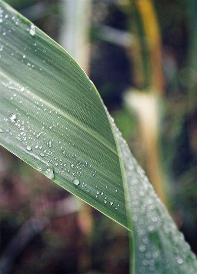 Leaf Leaves🌿
