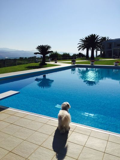 Relaxing Time Ilovemydog Myprincess🐶🐶 Isis😍 Holidays ☀ IPhoneography