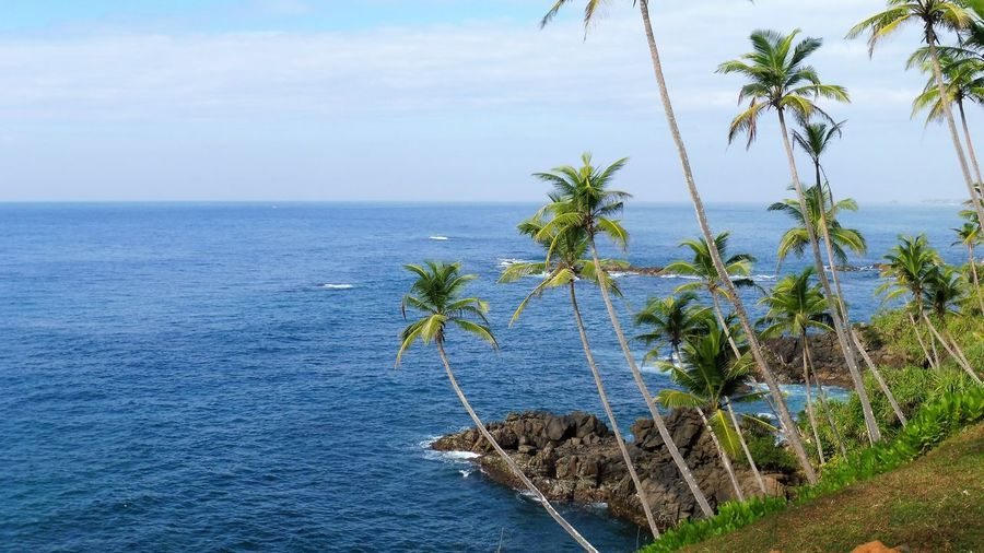 Sri Lanka Beach Beauty In Nature Day Growth Horizon Over Water Nature No People Outdoors Palm Tree Plant Scenics Sea Sky Tranquil Scene Tranquility Tree Water