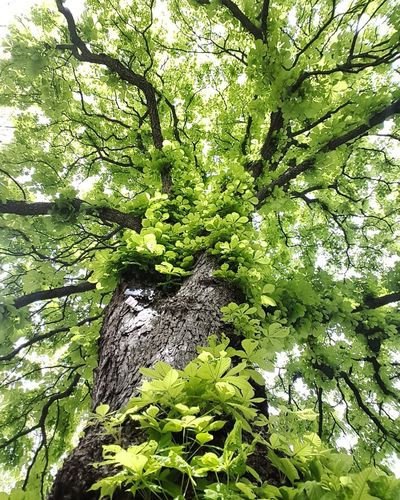 aiming high Springtime Samsungphotography #Cambridge #beautiful EyeEmNewHere Tree Backgrounds Close-up Green Color Plant Grass Leaf Vein Natural Pattern Leaves