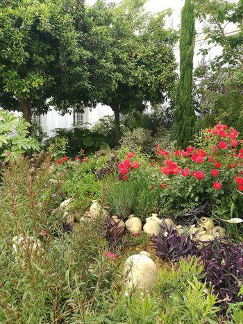 Flor de la Cava Sevilla Spain Sanluisdelosfranceses Tree Flower Grass Green Color Plant