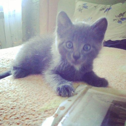 Мой маленький Томас)))