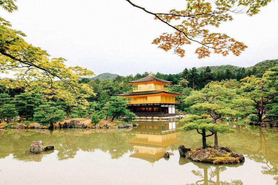 Kinkakuji (Golden Pavilion) during Fall. ASIA Fall Golden Pavilion  Japan Japanese  Kinkaku-ji Kinkaku-ji Golden Pavilion Kyoto Kyoto, Japan Kyoto,japan First Eyeem Photo Ultimate Japan