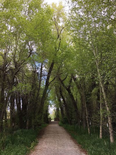 the trail in spring. peak green. Park City, Utah Plant Tree Growth No People Day Nature Direction