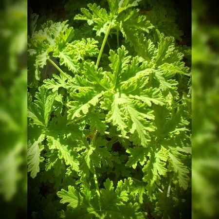 Flowers Flores Floroj Gardens Jardins Brasil Brazil Brazilo Leaf Green Color Plant Nature