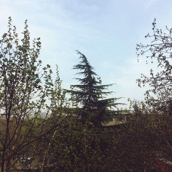 spring^_^
