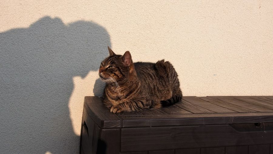 Shadow of person on wall by cat on table