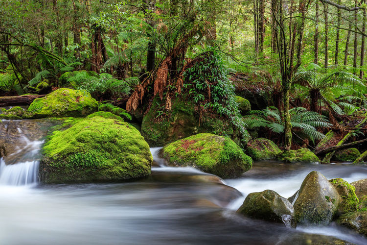 Taggerty Cascades Cascades Ferns Forest Photography Forest Scene Long Exposure Photography Meditation Place Mossy Rocks Mother Nature Peaceful Place Primieval Rainforest Rapids River Serenity Nature_collection Tree Ferns Wet Rocks