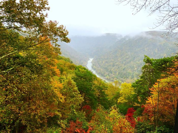 Autumn at the New River Gorge Lookout Autumn Visit West Virginia Fall Collection Travel West Virginia Travel Photography New River Gorge Fall Colors Autumn colors Plant Tree Beauty In Nature Scenics - Nature Tranquility Growth Tranquil Scene Mountain Nature No People Environment Non-urban Scene Landscape Green Color Fog Day Land Sky Outdoors Idyllic