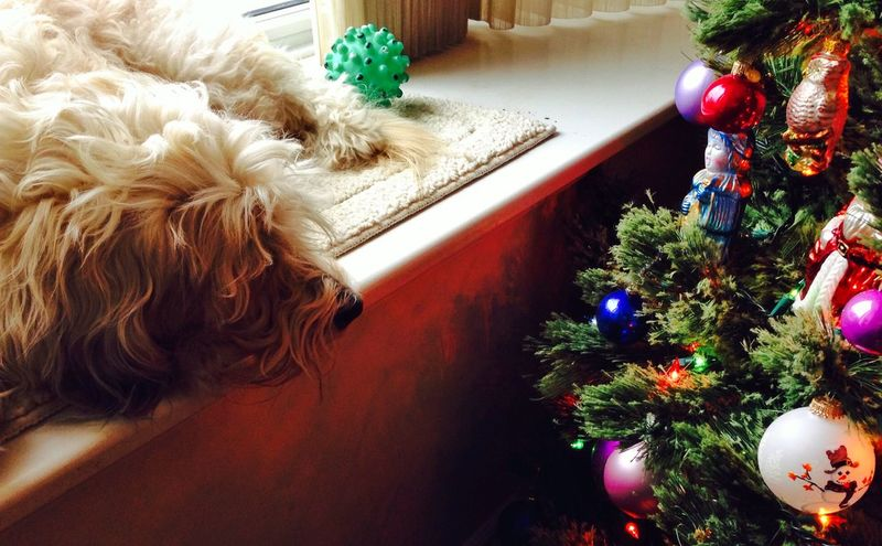 Even Dogs enjoy a good Christmas Tree : Christmas Dog