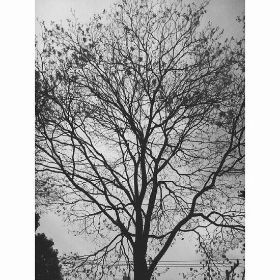 Tree Hugging A Tree Blankandwhite Winterinsaopaulo SaoPaulo-Brazil Nature On Your Doorstep Capture The Moment Blackandwhite Photography