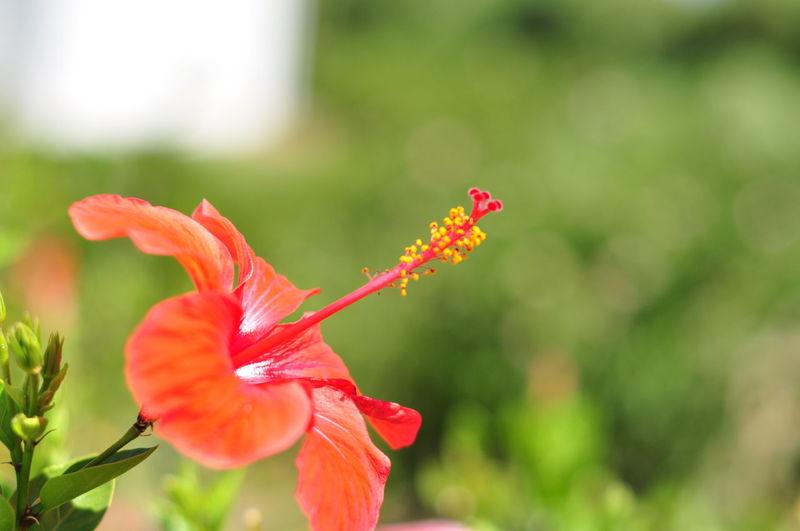 Colors Flowers