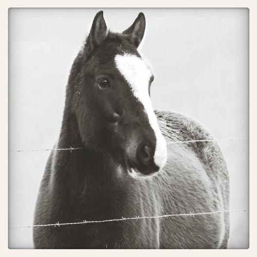 La complicité entre un cavalier et son cheval vaut bien plus que tout l'or du monde. Taylor♥