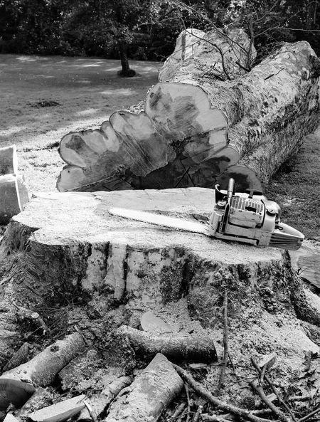 Tree Trunk Tree Trees Collection Outdoors Motorsag Work Tool Tools Eyemcaptured Eyemphotography EyeEm Gallery Day Sunlight Blavk And White Blackandwhite Photography Business Stories