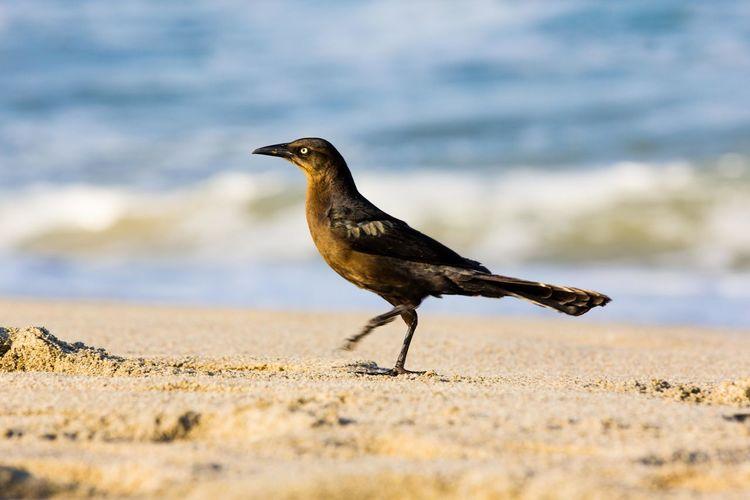 Bird on shore at beach