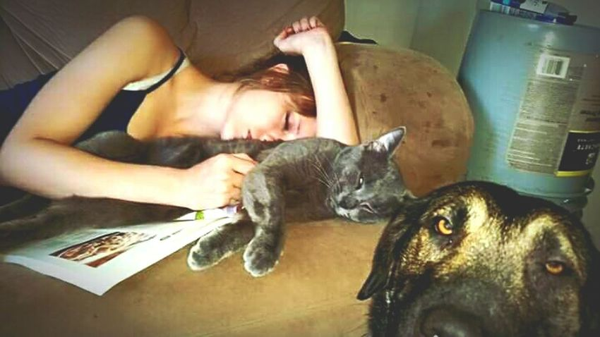 Night Night, Sleep Tight Everyday Lives Check This Out Photography Is My Escape From Reality! Every Picture Tells A Story Puppy Cat Napping EyeEm Gallery Photobombed To Funny Animal_collection Bestpicoftheday My Daugter Beautiful Girl