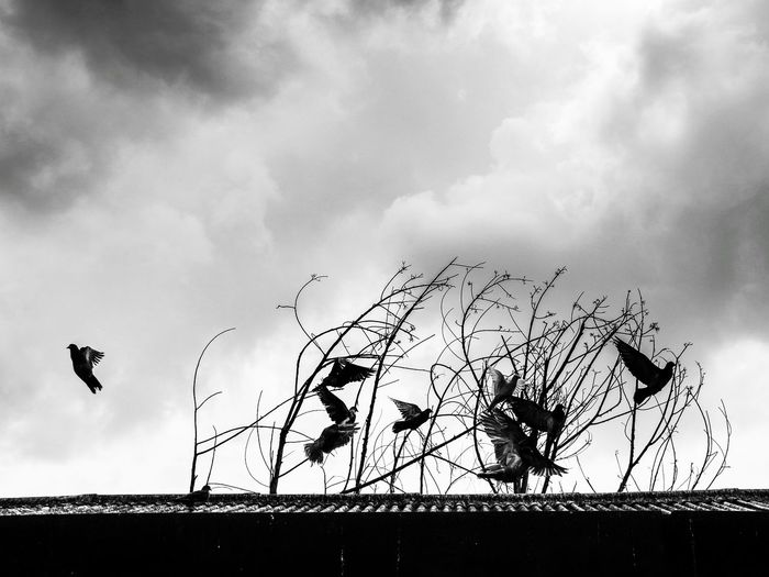Low angle view of silhouette birds on roof against sky