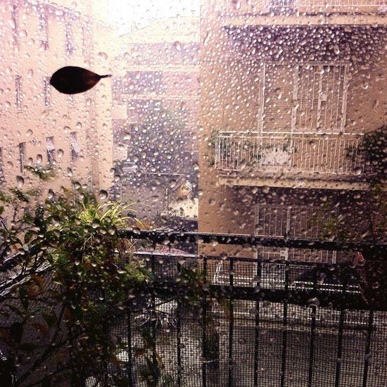 Rome Heavy Rain Rain Rainy Days Weather Nature Landscape Life Love Winter Day
