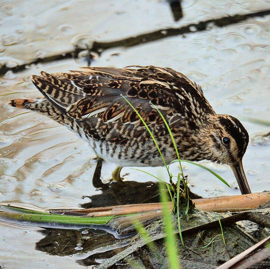 High angle view of a bird drinking water