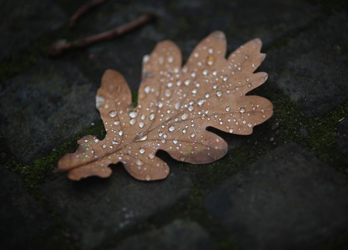 High angle view of wet leaf