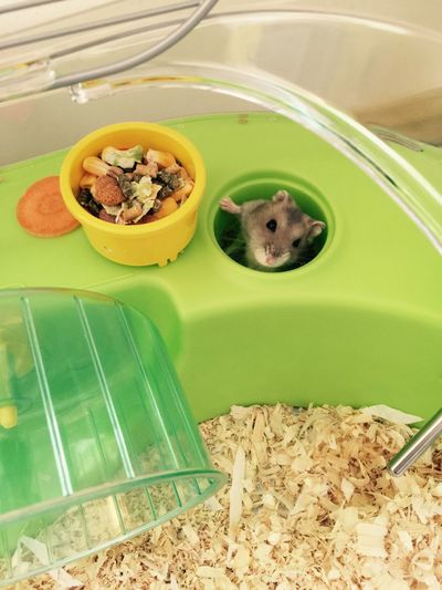 Boo! Cute Pets Hamster