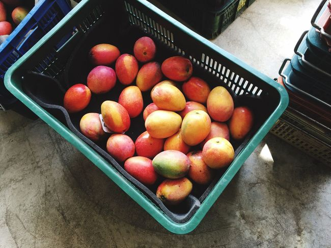 Harvest Mango Applemango Fruit Farmer Grower Exporting Food Taiwan
