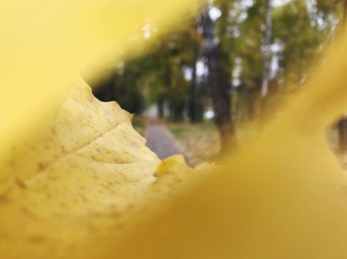 Yellow Plant Selective Focus Nature Close-up No People Leaf Tree Change Autumn