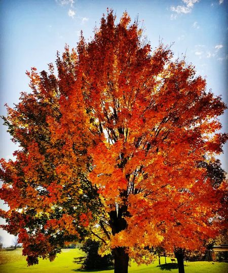 The beauty of Fall Tree Multi Colored Autumn Sky Close-up