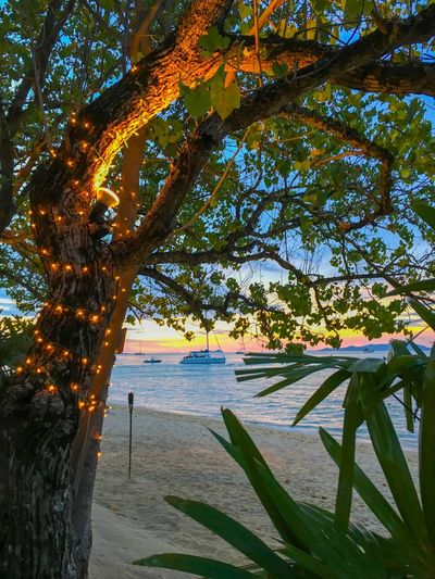 EyeEm Nature Lover Koh Samui EyeEm Lightning Light String Dusk EyeEm Summer Tree Nature Sea Beauty In Nature Water Tree Trunk Scenics Sky Branch Day Horizon Over Water No People Sunlight Outdoors Beach Tranquility Growth