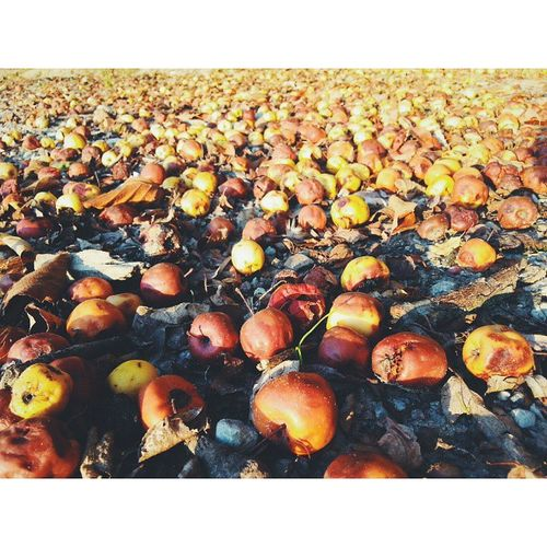 Rotten apples яблоки Шенфлиз Vscocam Kaliningrad apples