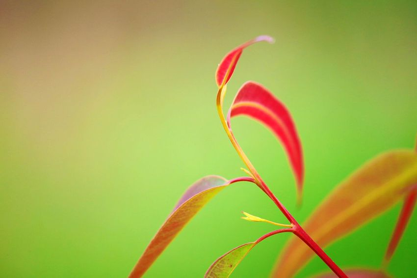 Close-up Green Color Plant No People Nature Beauty In Nature Colored Background