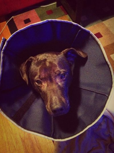 According to a client at work, this cone of shame is more effective against her own foot licker/chewer. We shall see...
