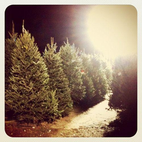{instagram post} Christmas tree shopping