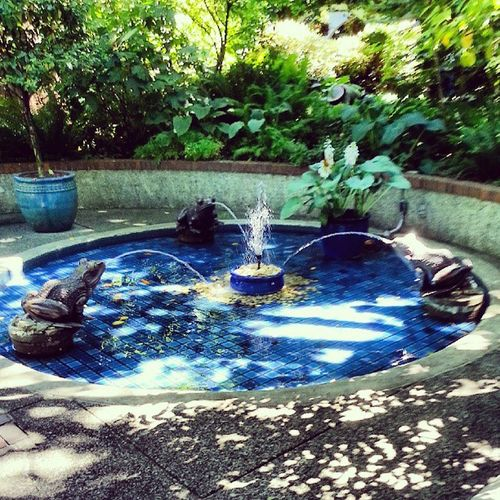 Vancouver Northvancouver Parkandtilford Garden fountain frog frogs summer July peace peaceful park goodfortune